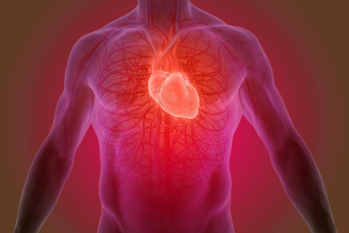 3d Graphic der menschlichen Herzanatomie